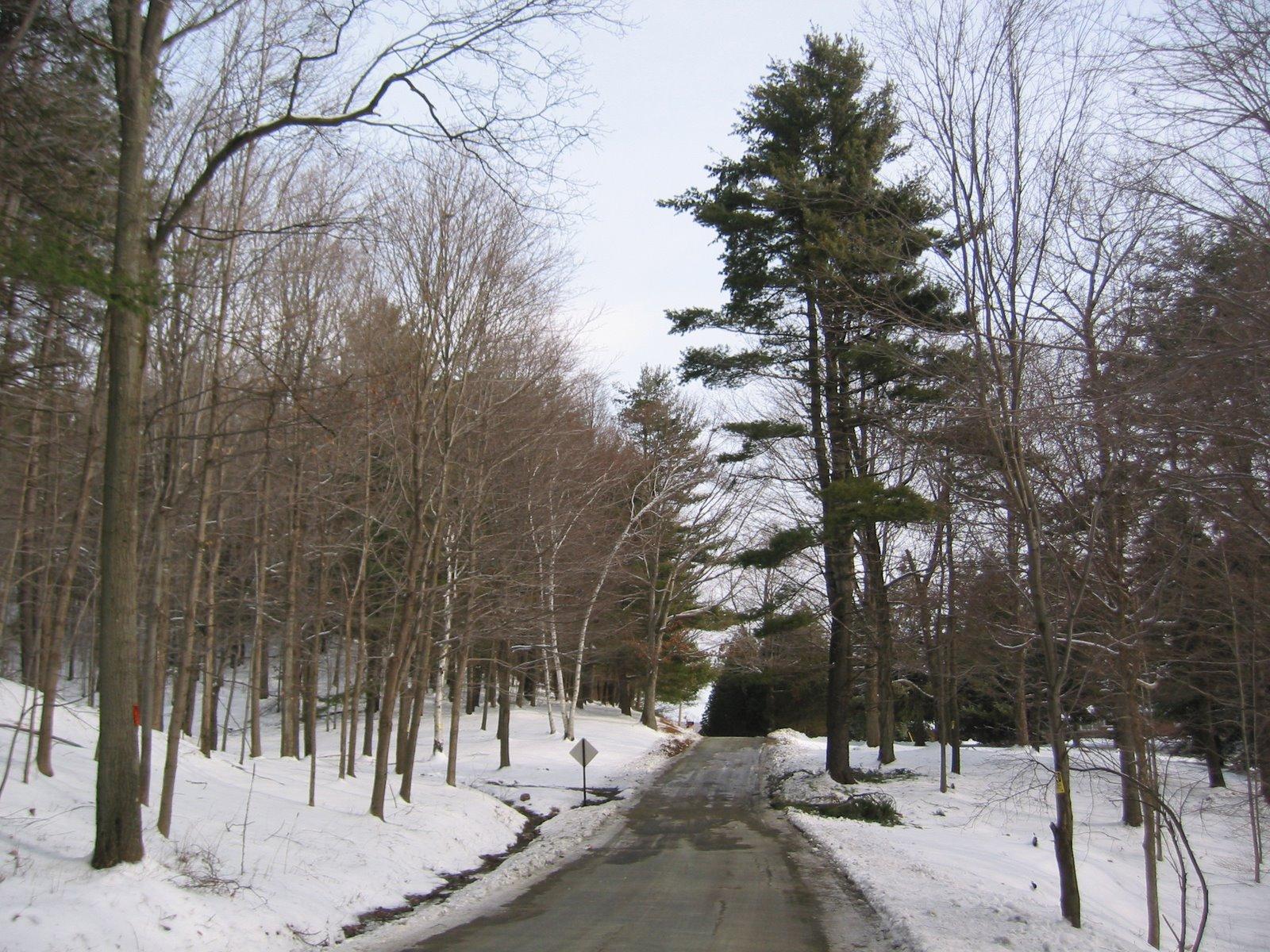 [IMG_0248.jpgwooded+road]