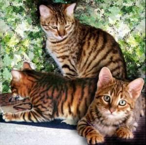 SK JERAM BATU: BICARA UMUM: Jenis-Jenis Kucing