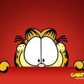 que lindo gatito !!!