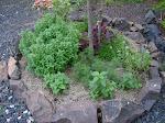Um canteiro de plantas medicinais ou fitoterápicas