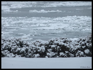 Snow Storm January 8, 2009