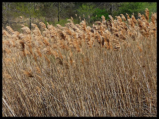 ditch grass blowing in the wind