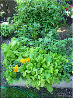 tomato, lettuce and pepper bed