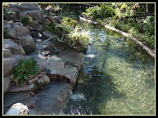 stream in kangaroo exhibit at Busch Gardens, Florida