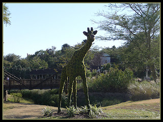 giraffe topiary at Busch Gardens, Tampa, Florida