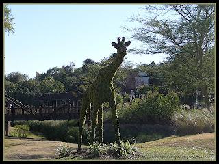 giraffe topiary at Busch Gardens, Tampa, Florida