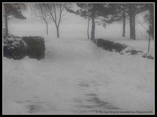 the great snowstorm of 2011
