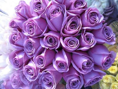 Cvetna oaza - Page 5 Purple+roses
