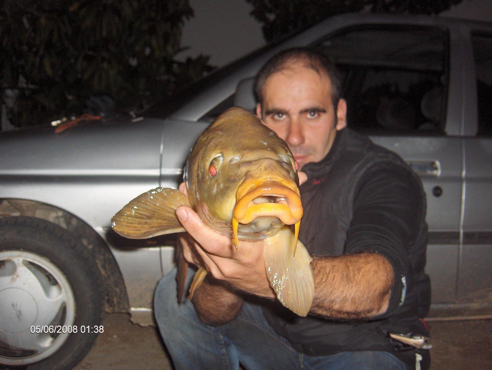 Carpa 4 kg cernada 5 junho 2008