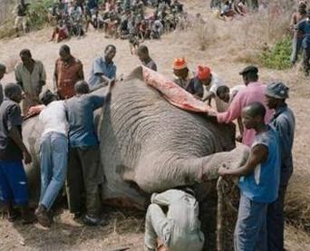 eat elephant