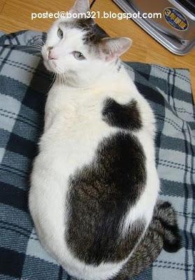 Kucing Yang Berbulu Seperti Kucing !