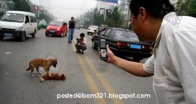 dog help friend
