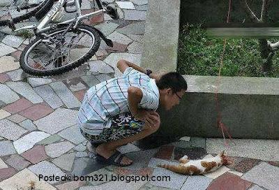 Kucing Diseksa Dan Dibunuh Dengan Kejam !