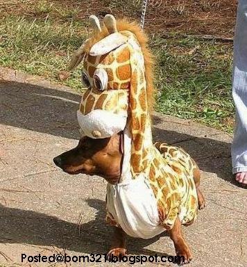 Anjing Di Sumpah Menjadi Zirafah !