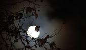 Peregrinación con luna llena