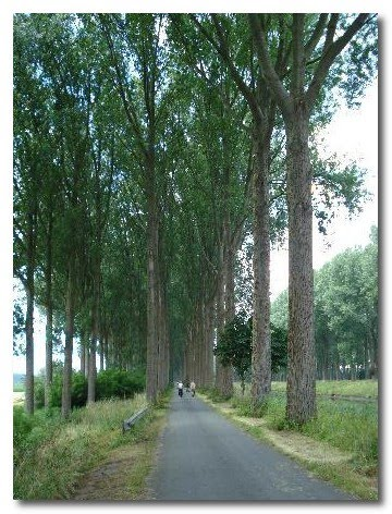 napoleon's trees france
