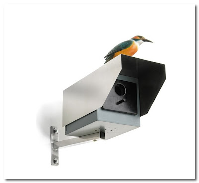 big brother bird house donkey products