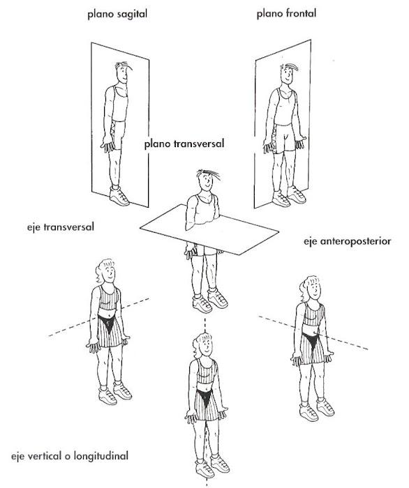 anatomía de la danza: descripcion ejes y planos de movimiento