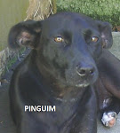 PINGUIM
