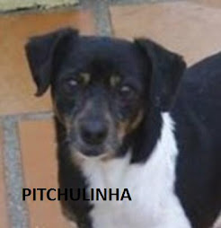 PITCHULINHA