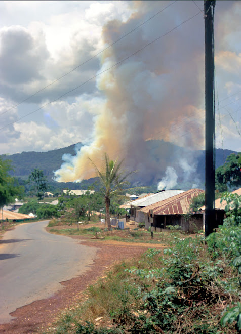 slash and burn farm prep near Kenema