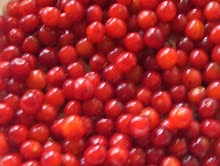 Wild Cherries Fresh Picked From A Cherry Tree