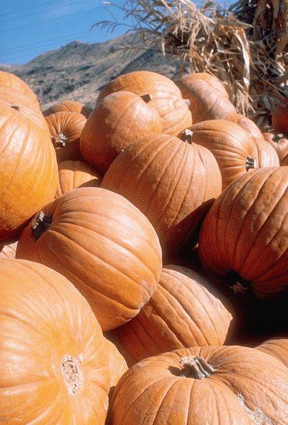 planting instructions for fresh pumpkin seeds