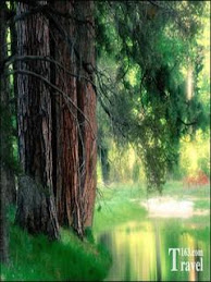 樹林、河水