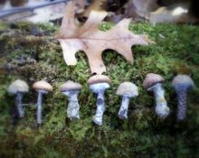 Acorn Mushroom Tutorial