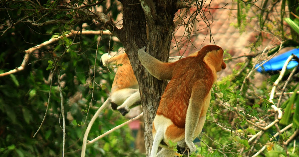Ways To Take Better Nature Wildlife Photographs