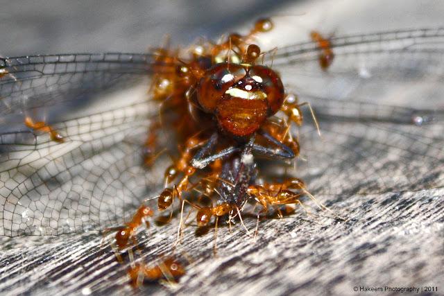 ant attack