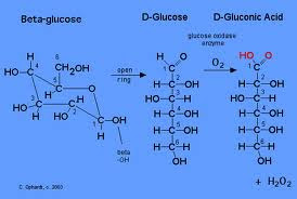 benedicts test on glucose