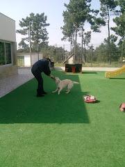 Visita do cão social à nossa escola