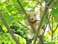 Ich bin ein Junge der Bären.