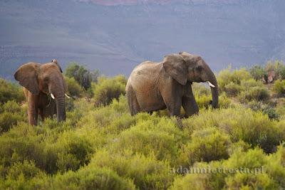 zdjęcia zwierząt - słoń