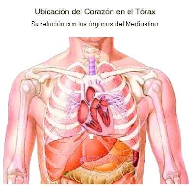 Anatomia del corazón: 2010