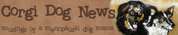 Corgi Dog News...musings of a menopausal dog mama.
