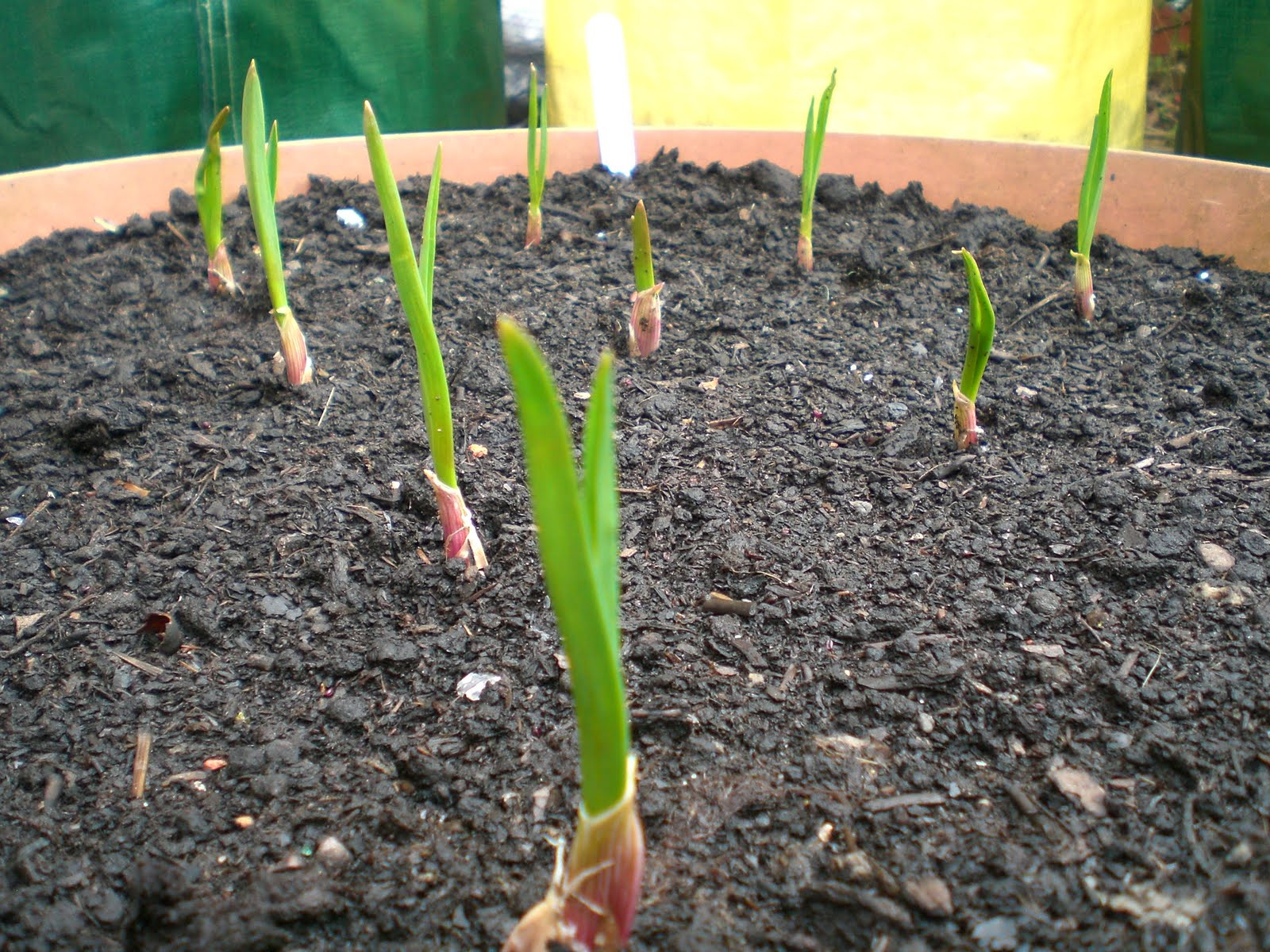 How does your garlic grow apps directories