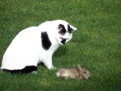 when the girls say autumn chasing the bunny, they were so worried and