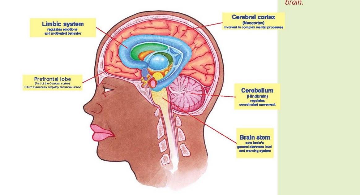 KI Media  How Does Trauma Effect the Brain