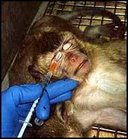 """La experimantación animal, un """"Daño colateral"""" Cosmetico"""