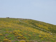 Η Ελληνική φύση των Φρυγάνων