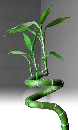 Feng shui las plantas en el feng shui su papel en la for Plantas para interiores feng shui