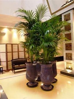 Feng shui decoracion con plantas un elemento valios simo for Decoracion con plantas segun el feng shui