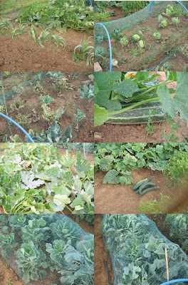 collage of vegetable plants