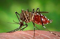 Campaña para erradicar el dengue del C.A.I.E.