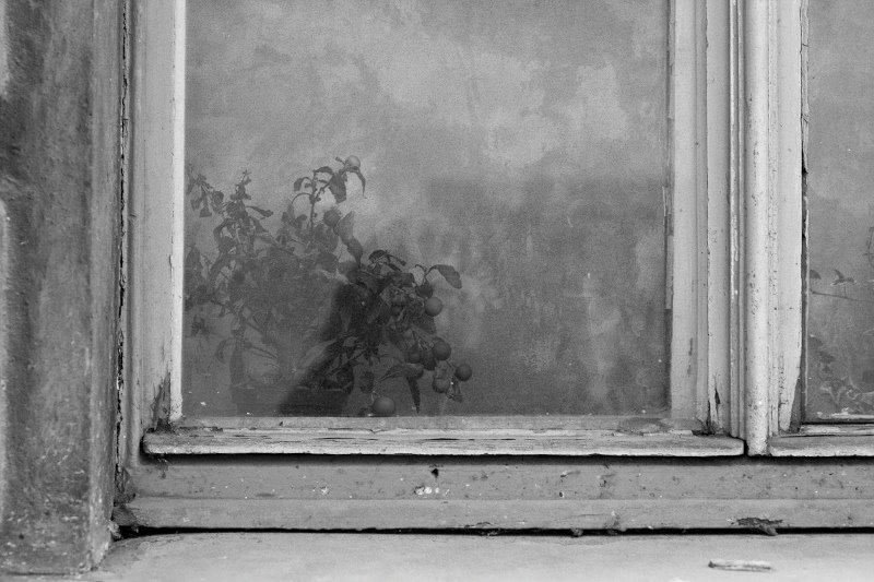 Window with a flower, Prague