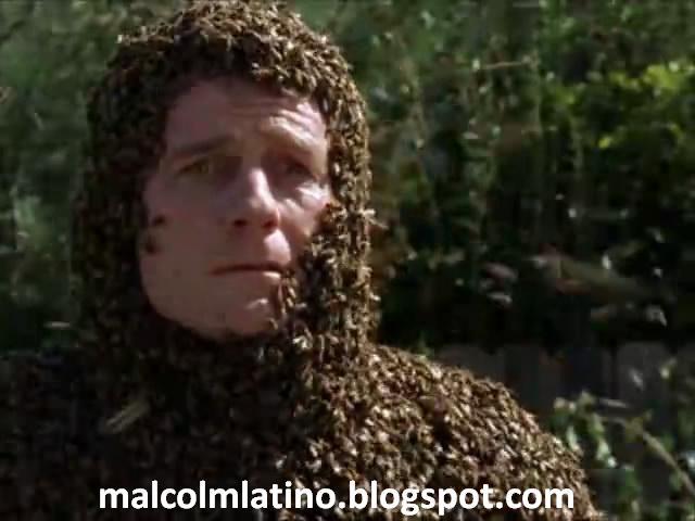 Malcolm-Latino-robots-abejas