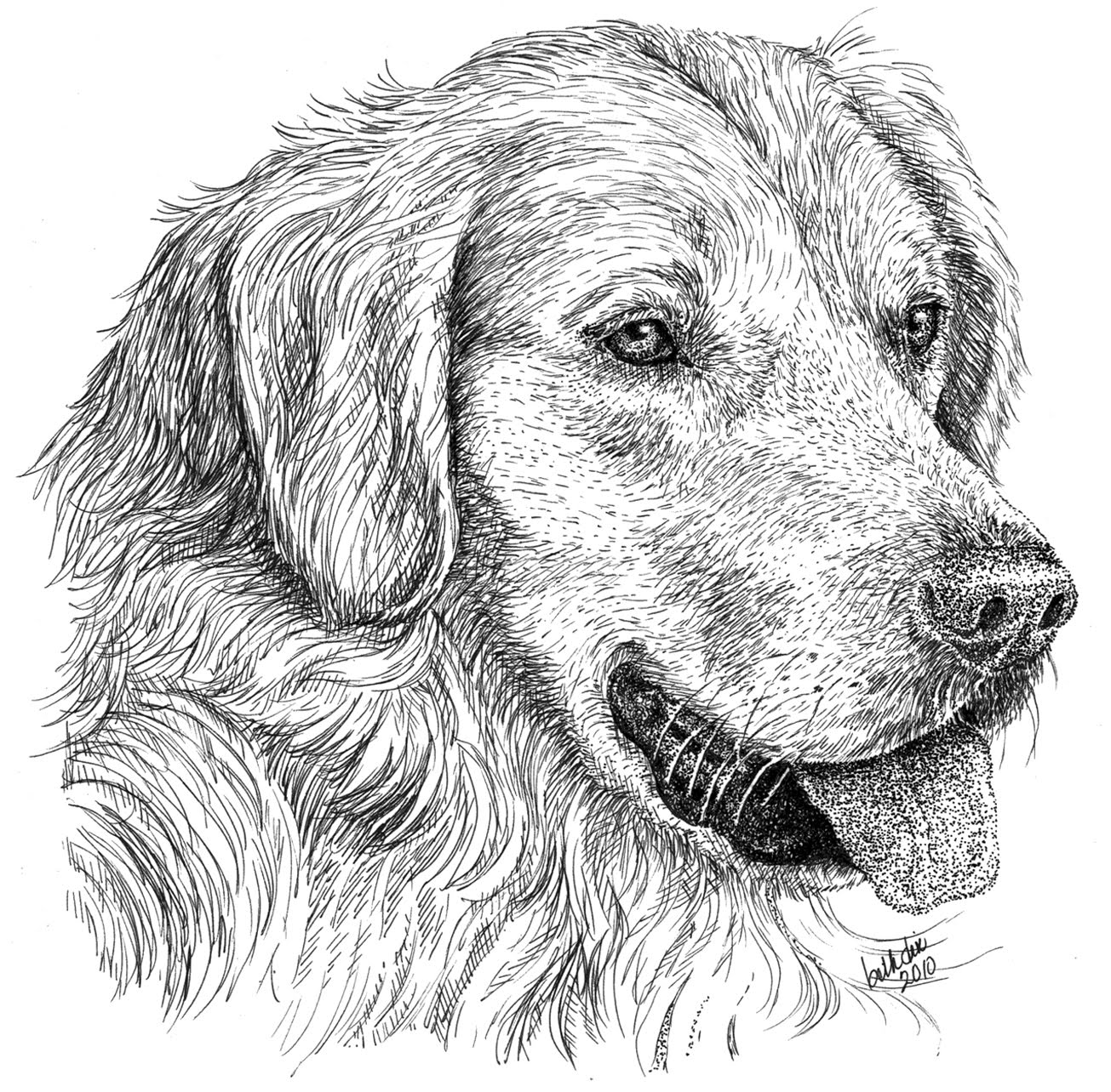 how to draw a puppy golden retriever in steps