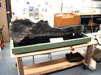 Museum Center Prep Lab